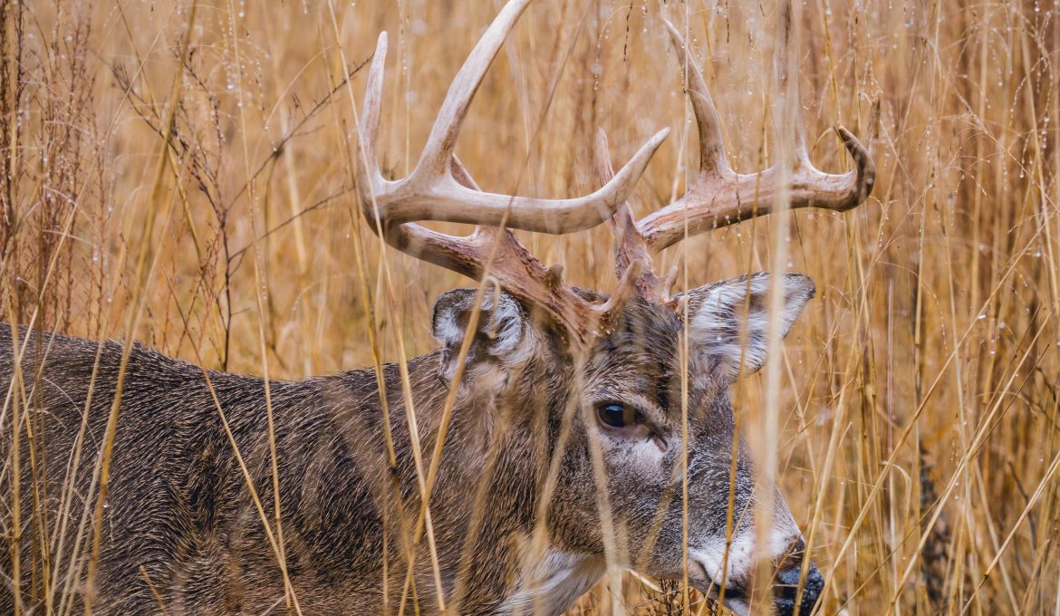 Tips for Late Season Deer Hunting