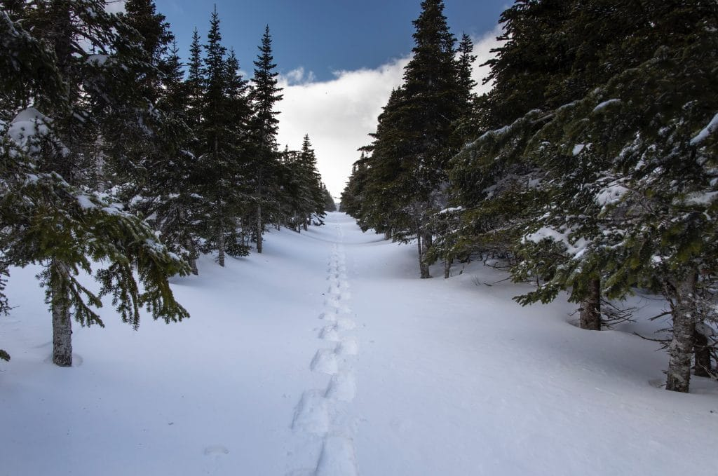 Snowshoe footprints in snowy forrest