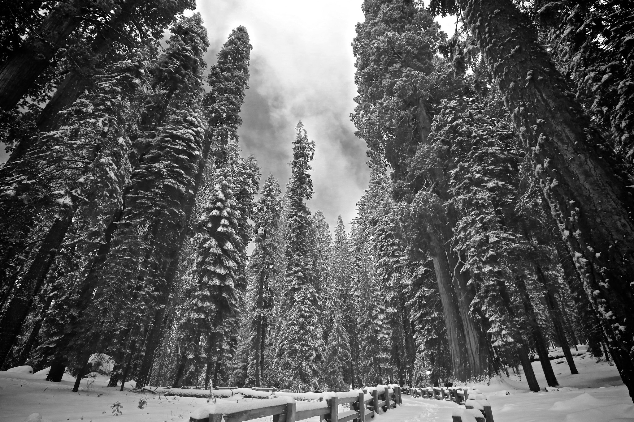 national parks perfect for winter hiking trips - sequoia national park PC Stefan Barycki via Flickr
