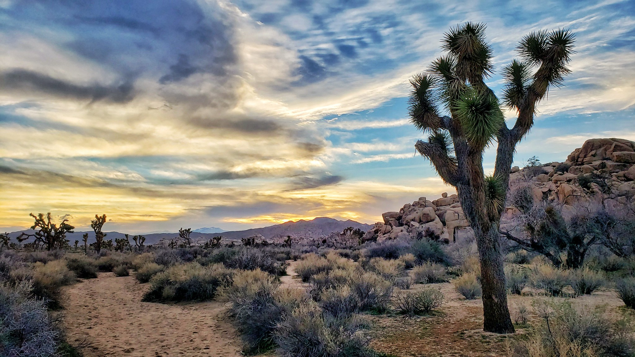 national parks perfect for winter hiking trips - joshua tree national park PC Randy Durrum via Flickr