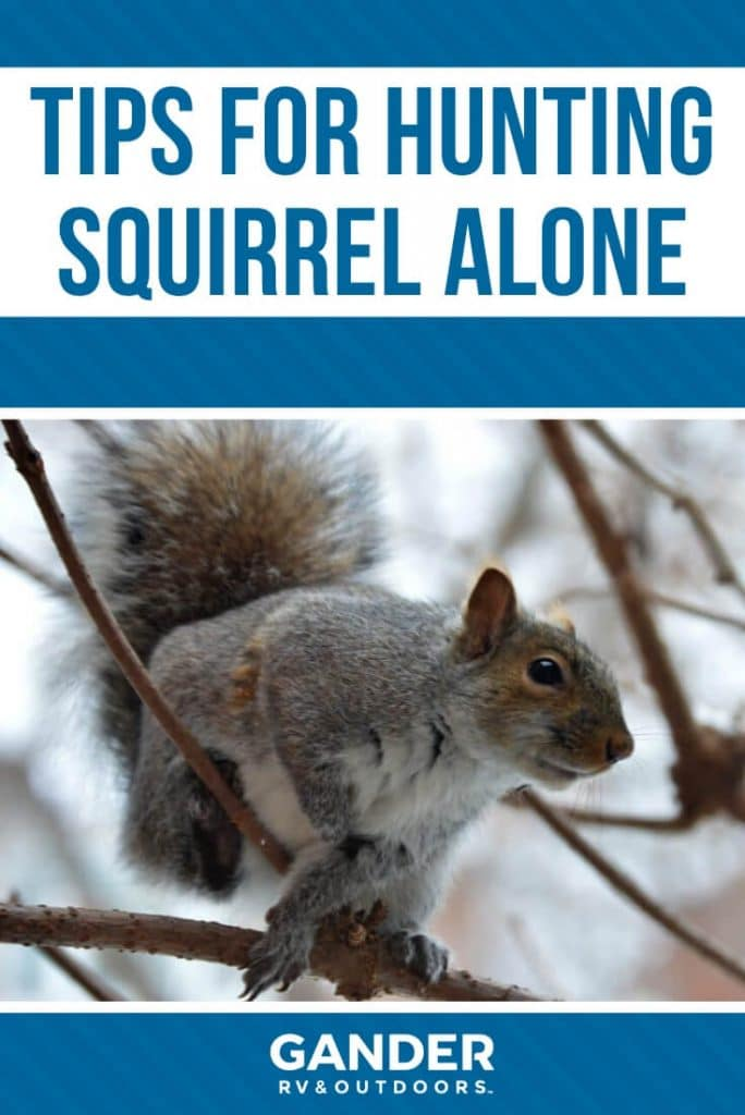 Tips for hunting squirrel alone