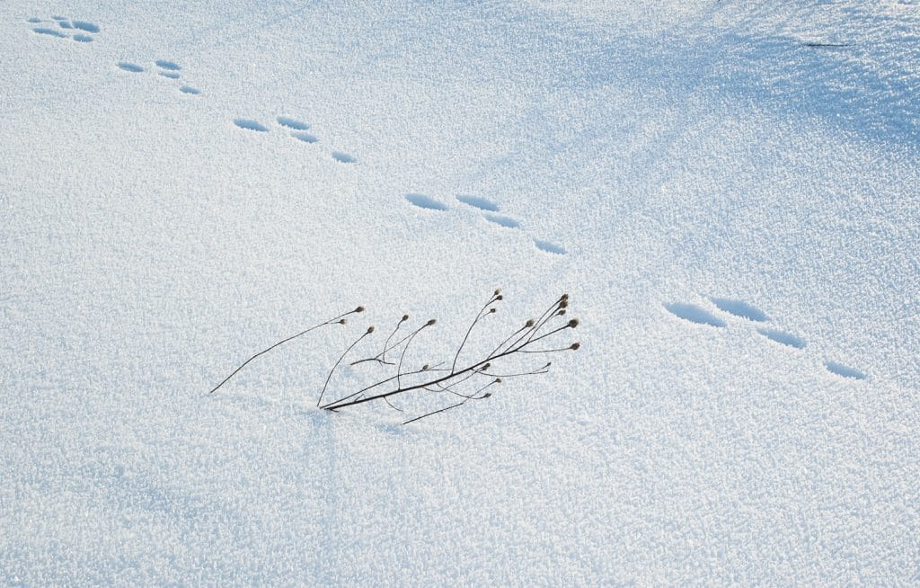 winter field with hare trail in the snow and dry twig