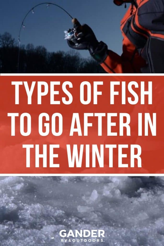The types of fish to go after in the winter