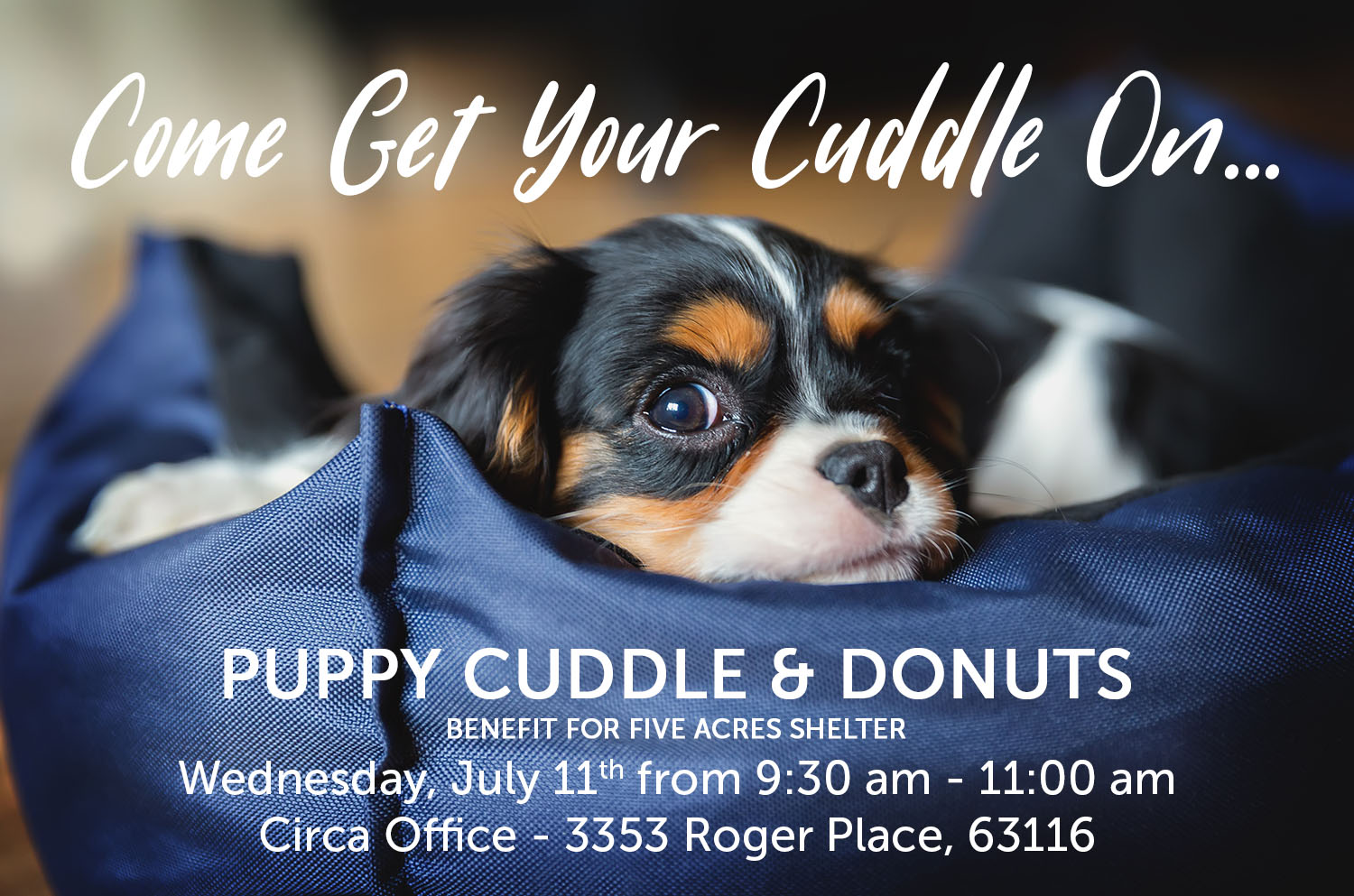 Puppy Cuddle & Donuts