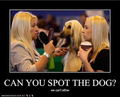 can-you-spot-the-dog