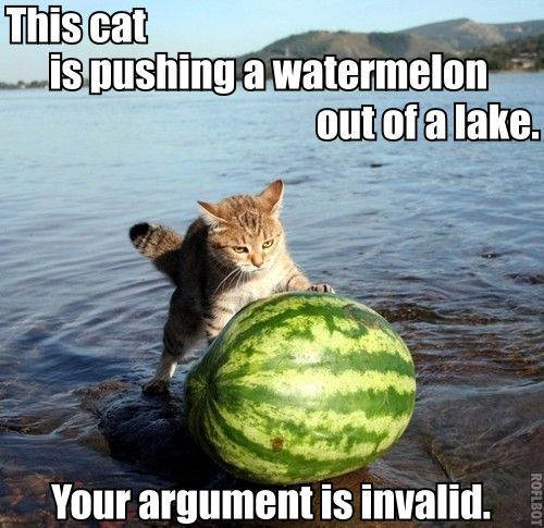 cat-pushing-watermelon