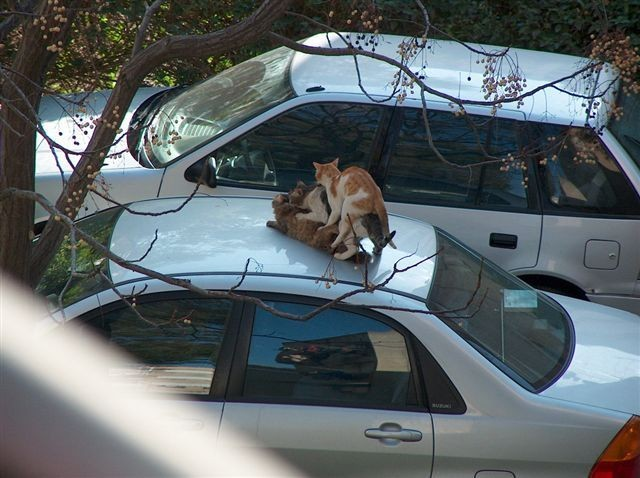 cat_threesome