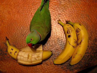 banana bird kill ahhhh omfg cool story bro
