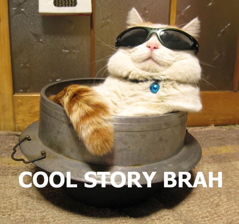 cat cool story