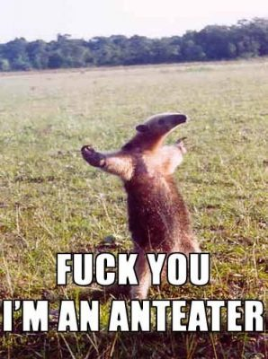 fuck you im a anteater