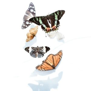 Crisis, Transformation, and Spiritual Friendship