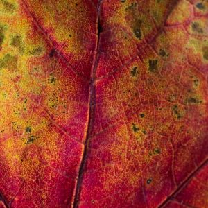 Seven Lessons Learned from Leaves