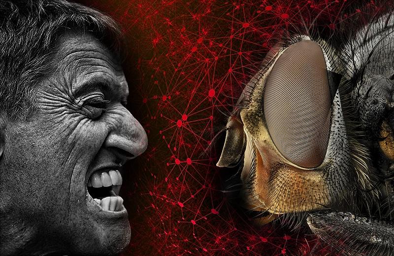 Os Homens e as moscas