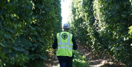Anheuser-Busch Monopolizes South African Hop Supply from Craft Breweries