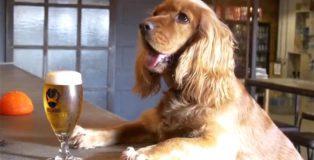 brewdog pet parental leave