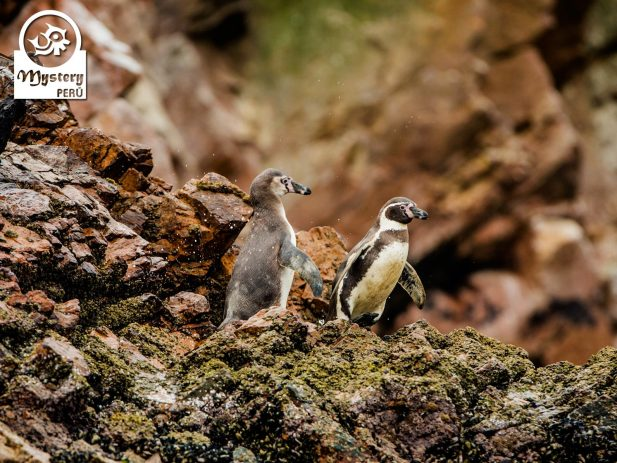 Tour to the Paracas Reserve and The Ballestas Islands