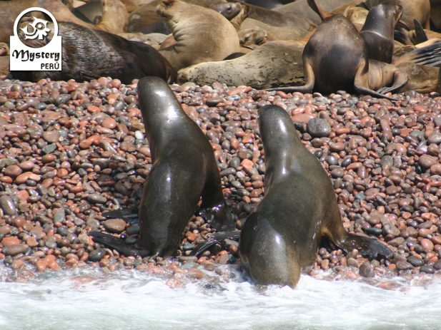 Ballestas Islands and Nazca Lines Full Day Tour from Lima