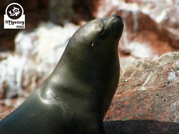3 Days Paracas Reserve 9