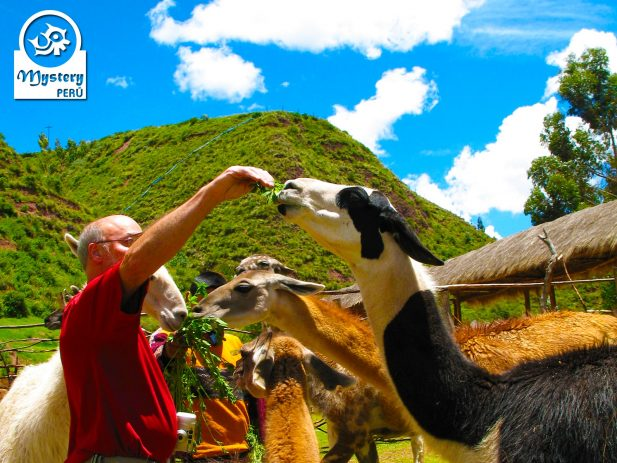 4 DAYS Best of Cusco Sanctuary of Machu Picchu & Sacred Valley 5