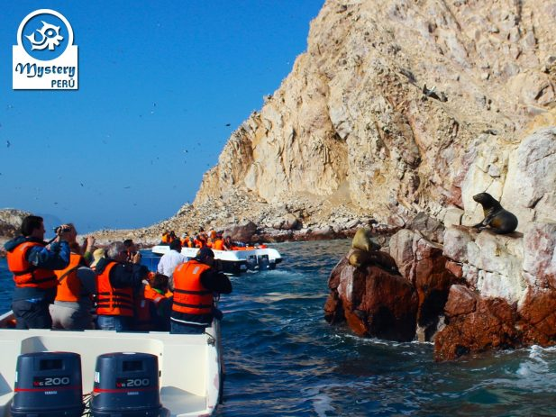 Ballestas Islands Tour Leaving from San Martin Port 8