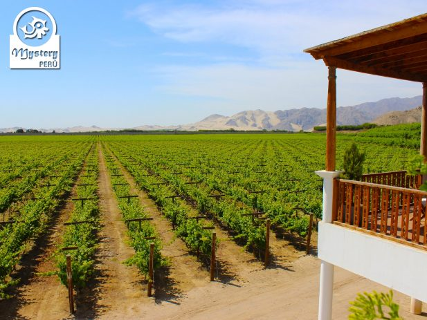 Tour to The Vineyards of Pisco 10