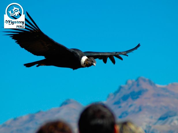 Colca Canyon Full Day visit.