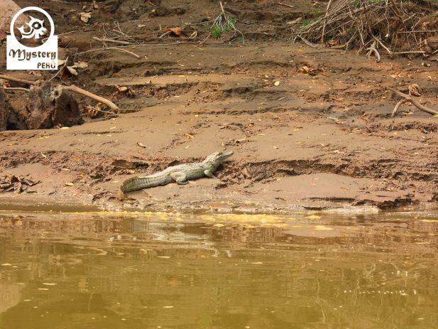 Posada Amazonas Lodge & Tambopata Reserve Tours 6.