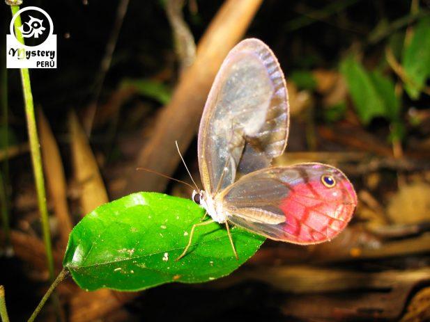 Posada Amazonas Lodge & Tambopata Reserve Tours 9.