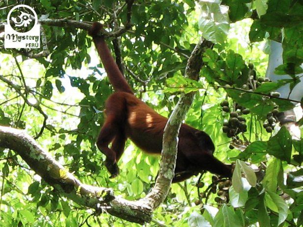 Posada Amazonas Lodge & Tambopata Reserve Tours 7.