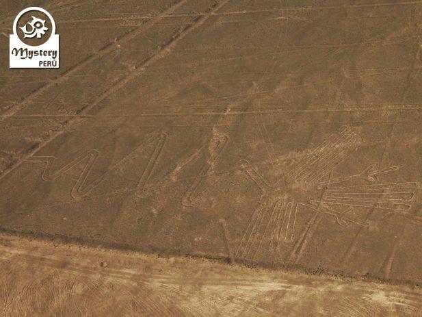 Lineas de Nazca + Ruinas de Cahuachi 7