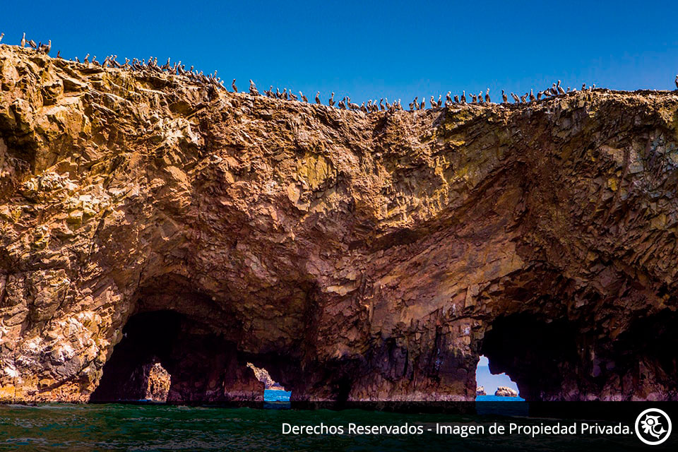 Oasis de Huacachina y Reserva de Paracas en bus turístico 2 Días