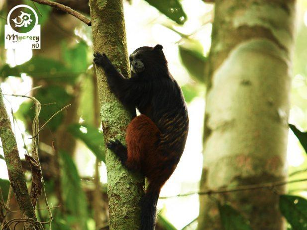 Reserva de Tambopata y Posada Amazonas 10