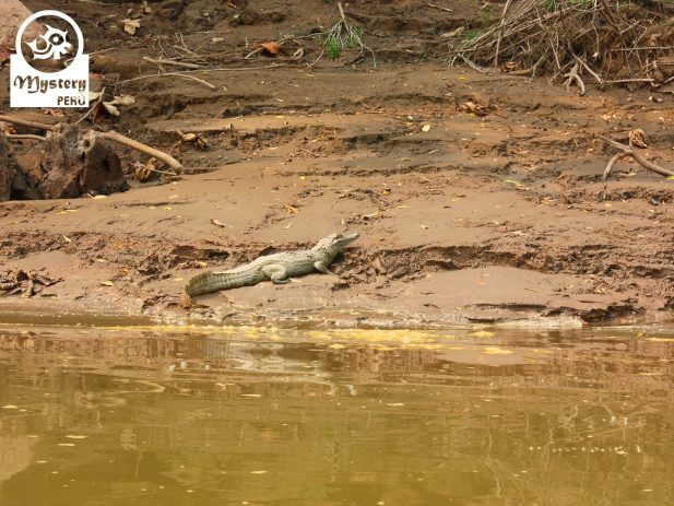 Reserva de Tambopata y Posada Amazonas 8