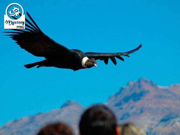 Tour Privado al Cañon del Colca & Viaje a Puno 3 Dias 11