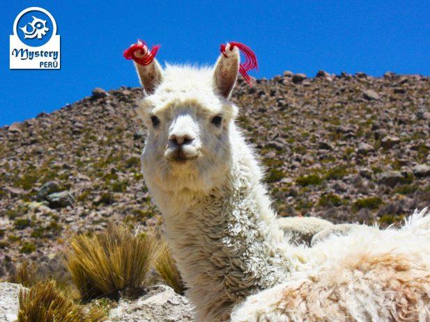 Tour al Colca & Viaje a Puno 2 Dias 6