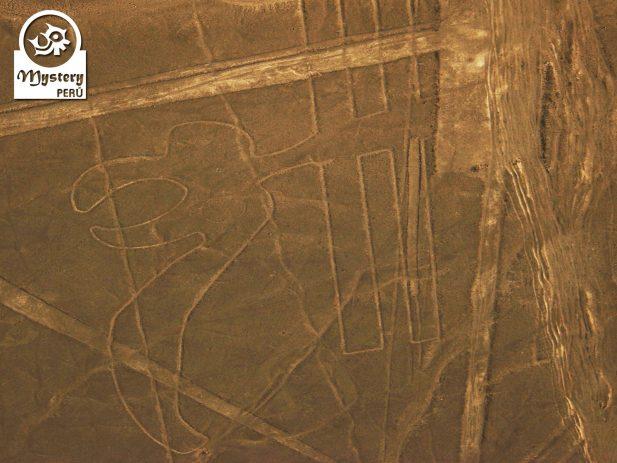 Vuelo a las Lineas de Nazca desde el Aeropuerto de Nazca 8