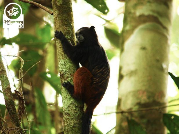 Refugio Amazonas Lodge & Tambopata Reserve Tours 9.