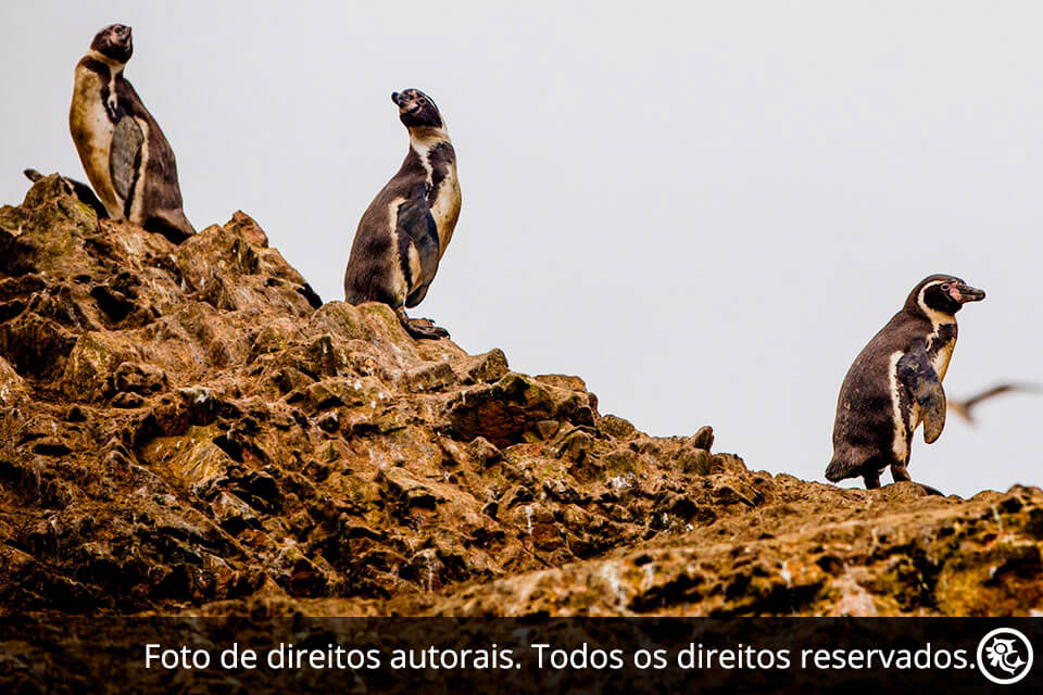 Tour às Ilhas Ballestas e à Reserva Paracas