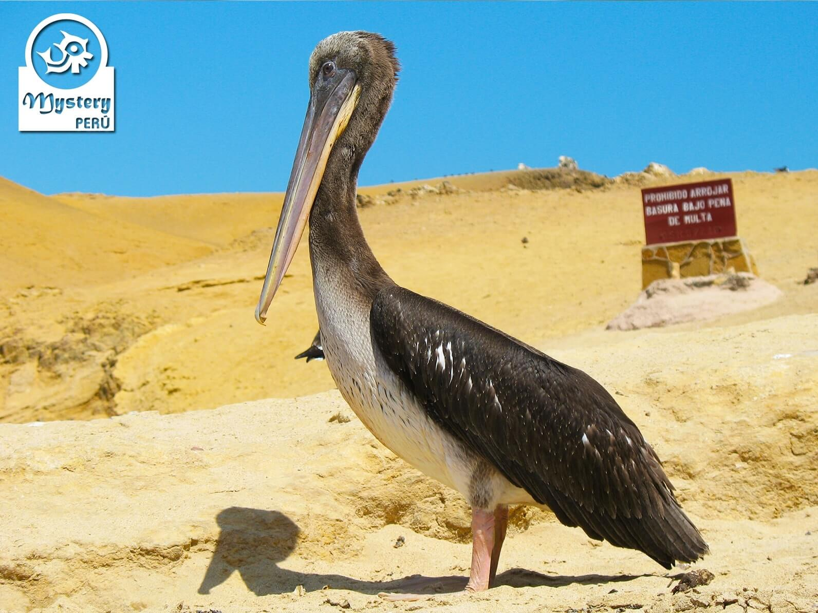 Tour na Reserva Nacional de Paracas