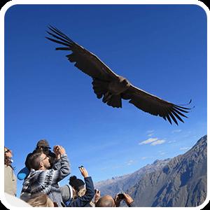 Cañón del Colca y Viaje a Puno