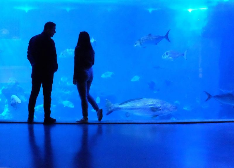 Photo of Downtown Aquarium