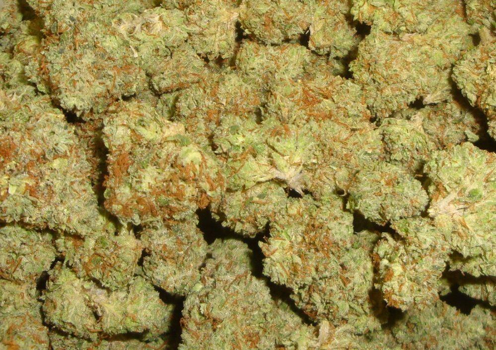 Mendobreath Indoor Cannabis