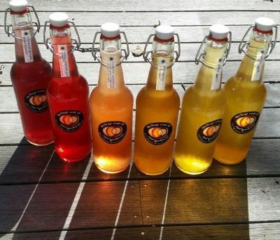 Kulture Club MV Kombucha Selection & Flavors Made On Martha's Vineyard