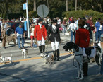 Dog_Parade_in_Deland.jpg