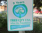 9_Year_Tree_City_USA.JPG