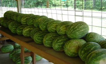SugartownWatermelonStand.jpg