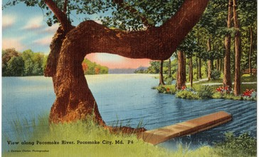View_along_Pocomoke_River__Pocomoke_City__Md__70296_.jpg