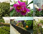 Gubler_Orchid_Orchard_Collage.jpg