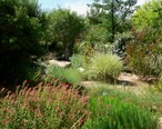 Springs_Preserve_garden_plants.jpg
