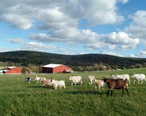FarmSanctuary.JPG
